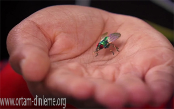 Gizli Kamera Tespiti ve Böcek Dinleme Taraması